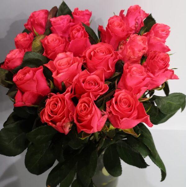 Rozes Pink Takazzi smaržīgās 50cm